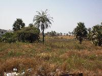 Empty land for sale at Brikama...