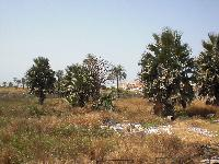 Empty land for sale at Bijilo