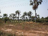 LAND FOR SALE IN MANJAI KUNDA