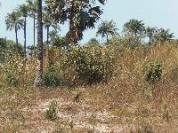 Empty land for sale at Jalamba...