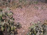 Land for sale @ Sukuta-Nema