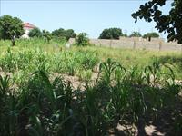 Land for Sale At Brusubi Layou...