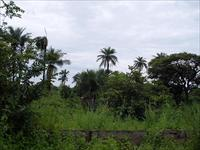 Empty land for sale in sanyang...