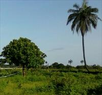 Massive Plot of Land 600m x 20...
