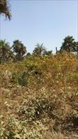 LANDS FOR SALE IN SANYANG SEAV...