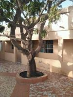 House for Sale in Serrekunda D...